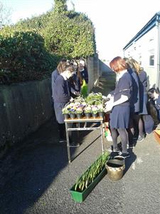 Green School Students planting flower tubs